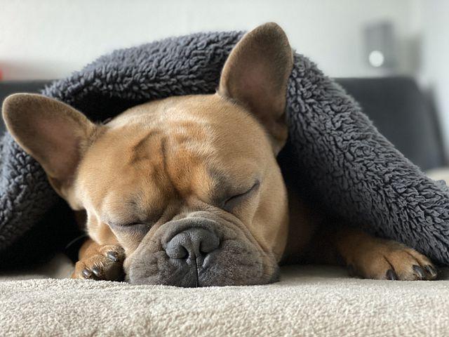 Fatigue et nutrition manque de dopamine